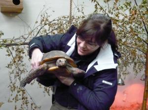Tortoise Dublin zoo