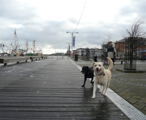 Two dogs walking