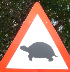 tortoise crossing